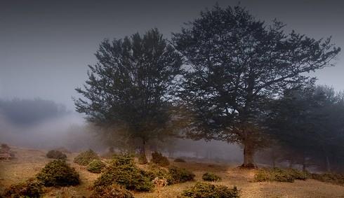 Nebbia sui Nebrodi