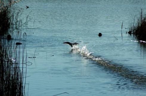 Lago di Pergusa