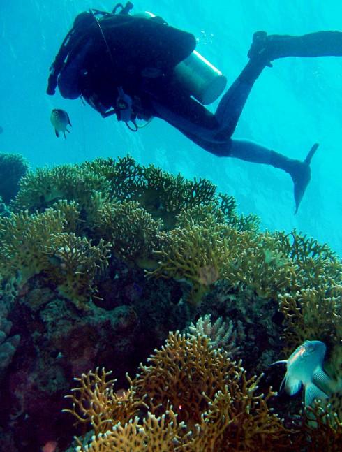 Pantelleria, pesca subacquea