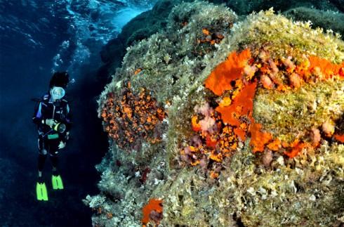 Linosa tre dita fondale a coralligeno